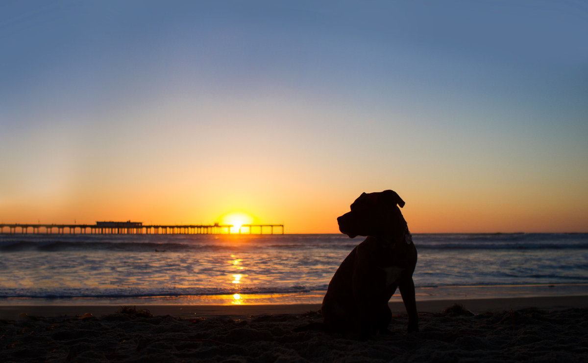 Beach sunset dog photo in San Diego, CA