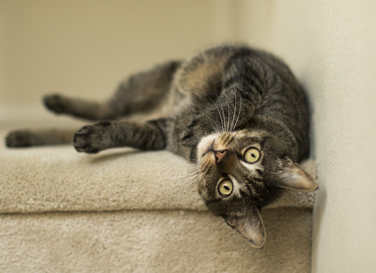 san_diego_cat_photographer_3