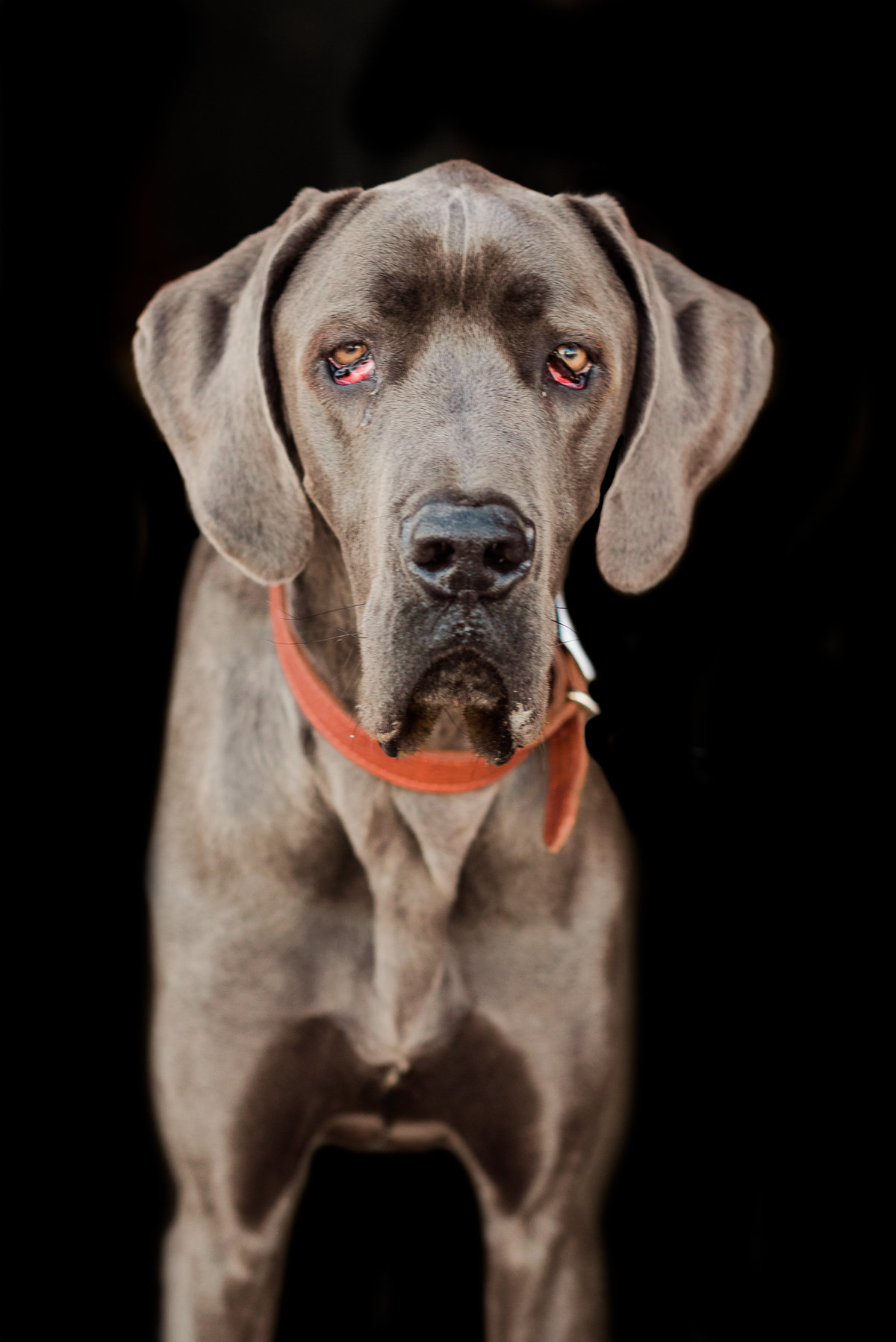 hampton roads dog photographer-6