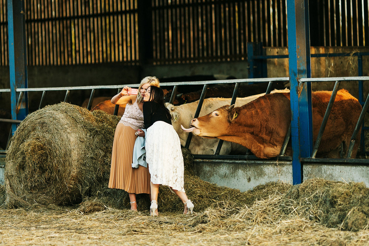 Award Winning Wedding pictures of animals at farm weddings