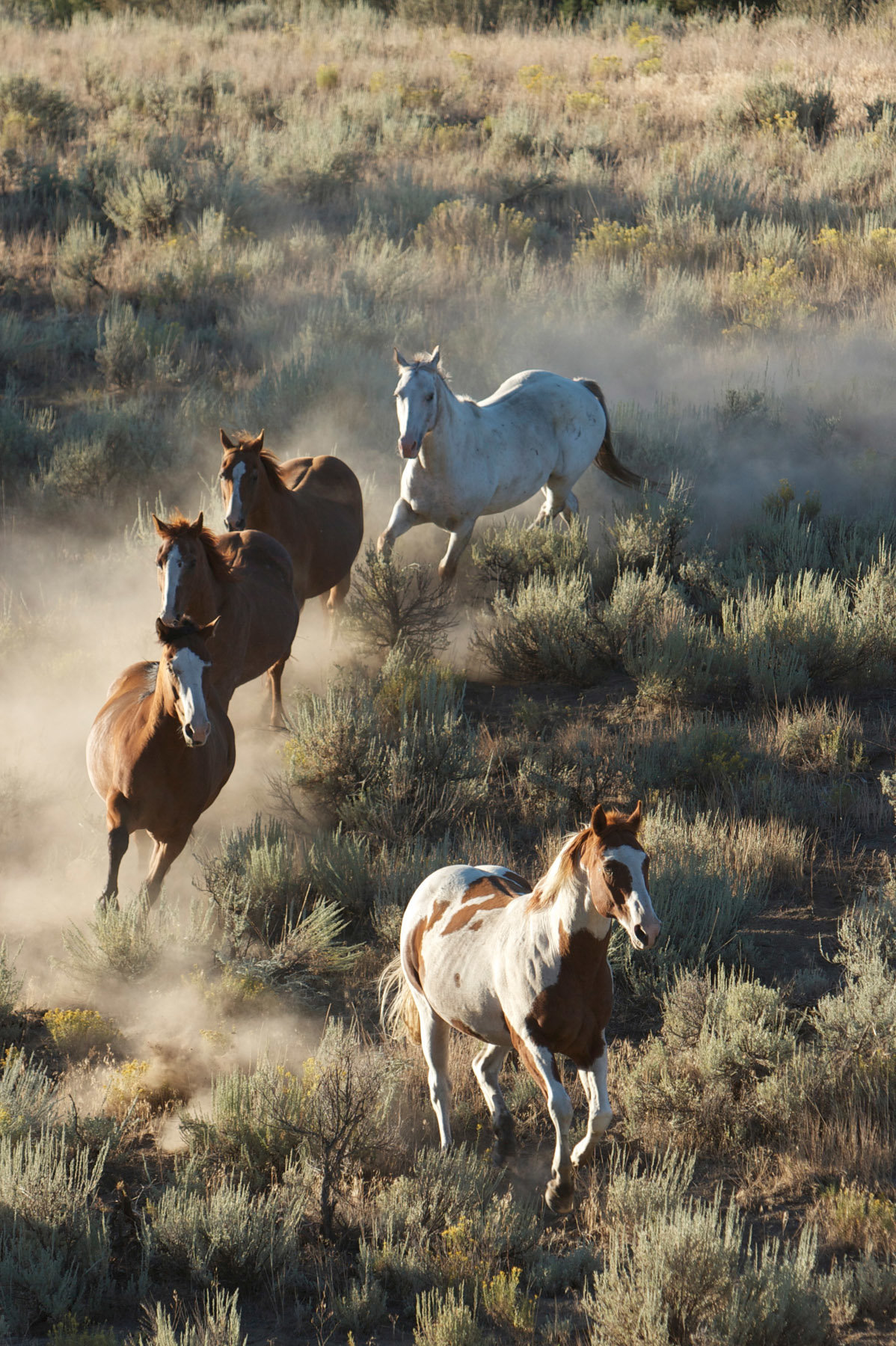 wild horse photographer wenatchee  Lynette Smith Photography