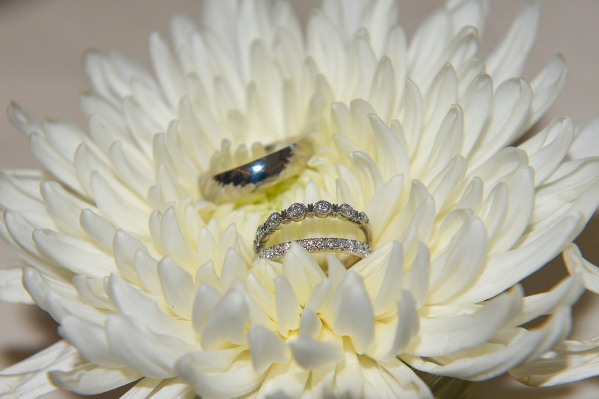 Musuem of Dance, Saratoga Springs, NY, bride and groom wedding rings