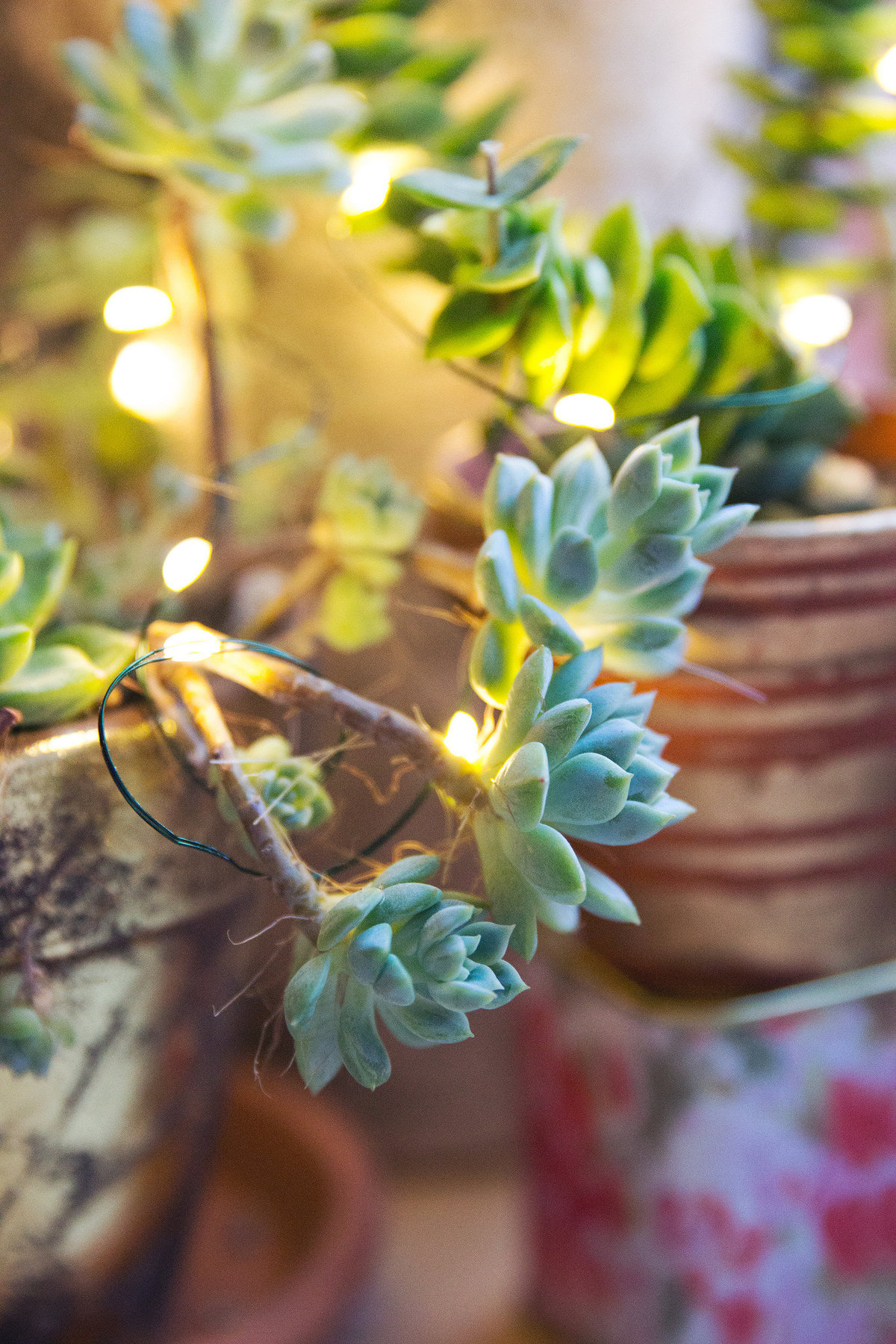 succulents-white-lights-2
