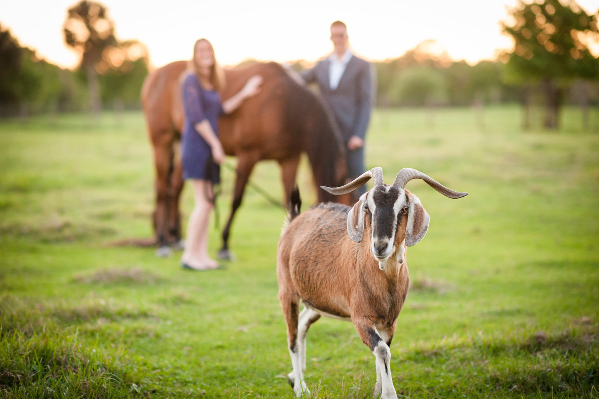 Equine Photography Engagement
