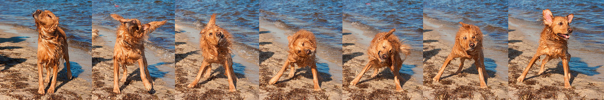 Amazing local pet photography with a golden retriever