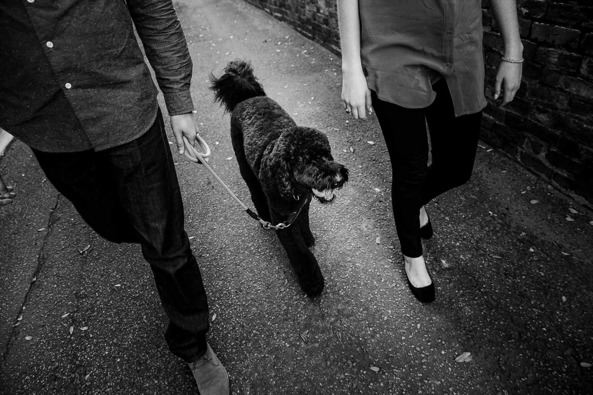 Taking a walk with standard poodle pet photos by King and Fields Studios Charleston SC