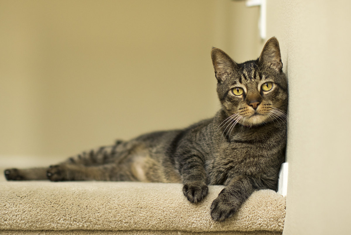 san_diego_cat_photographer_5