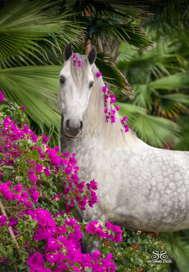 stunning-steeds-photo-stallion-in-flowers