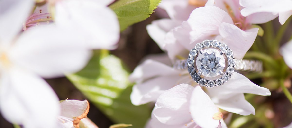 Round Cut Diamond Engagement Ring with Halo on Light Pink Cherry Blossom Photo