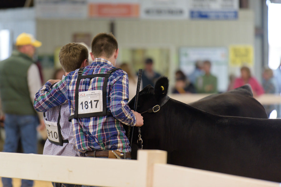 Virginia-Stock-Show-photographer (1)