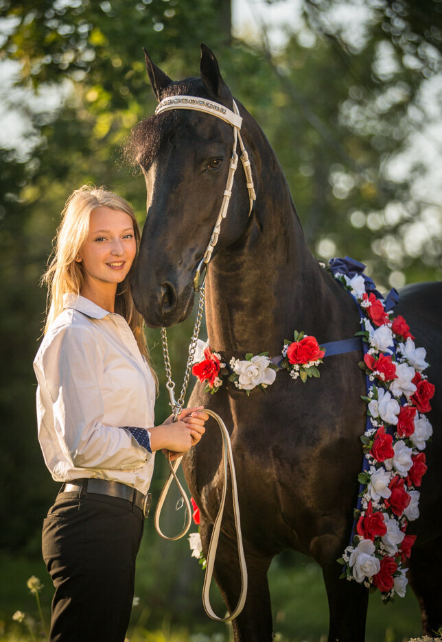 stunning-steeds-photo-friesian-champion