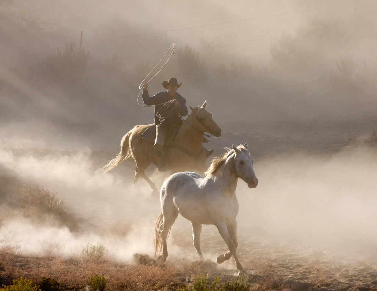 cowboy chasing horse Lynette Smith Photography