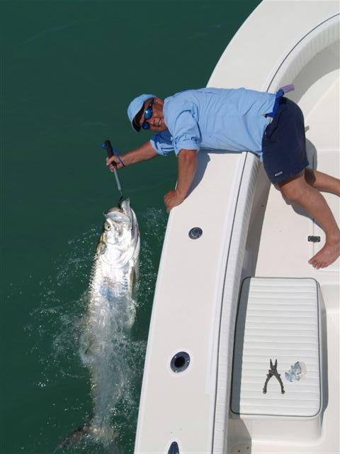 tarpon fish photo