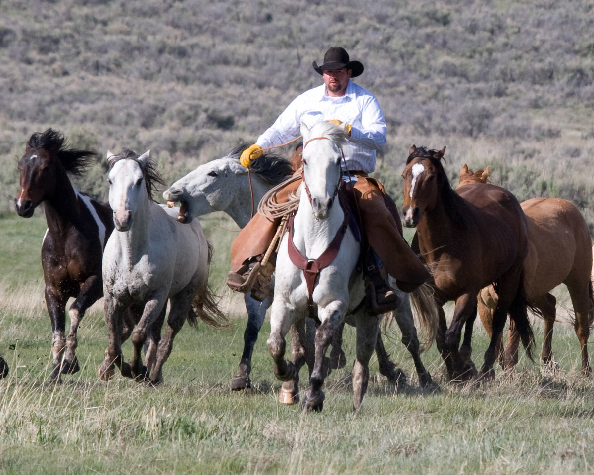 cowboy with horses photographer  Lynette Smith Photography