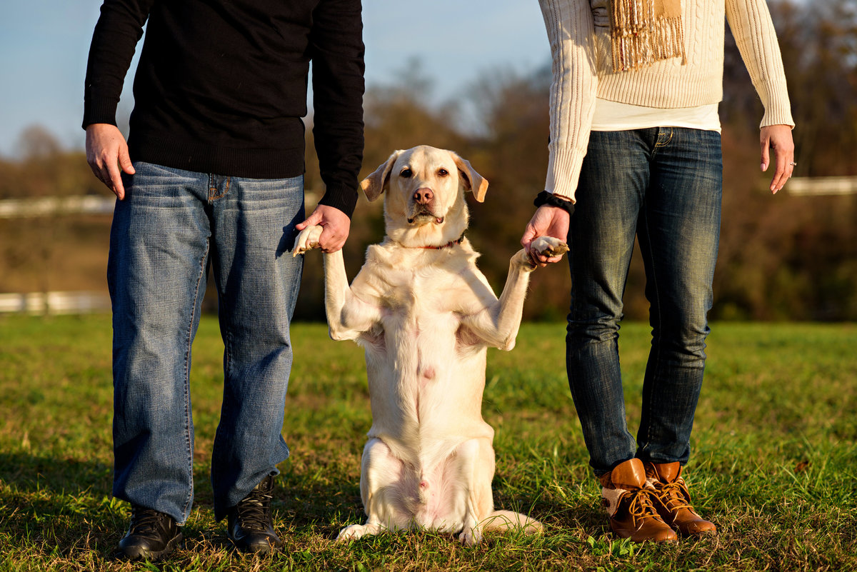 An engaged couple hold hands with their dog in a park.