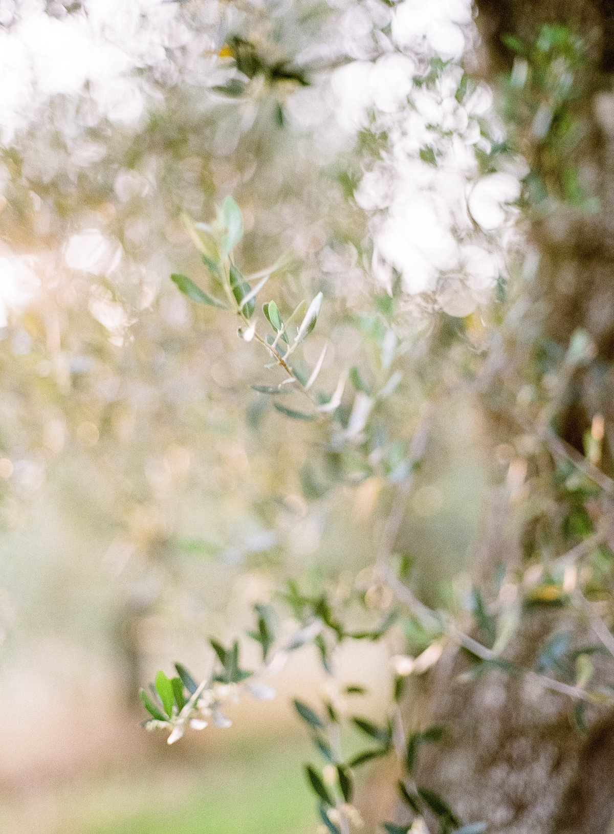 0_Tuscany_Weddingphotographer_123