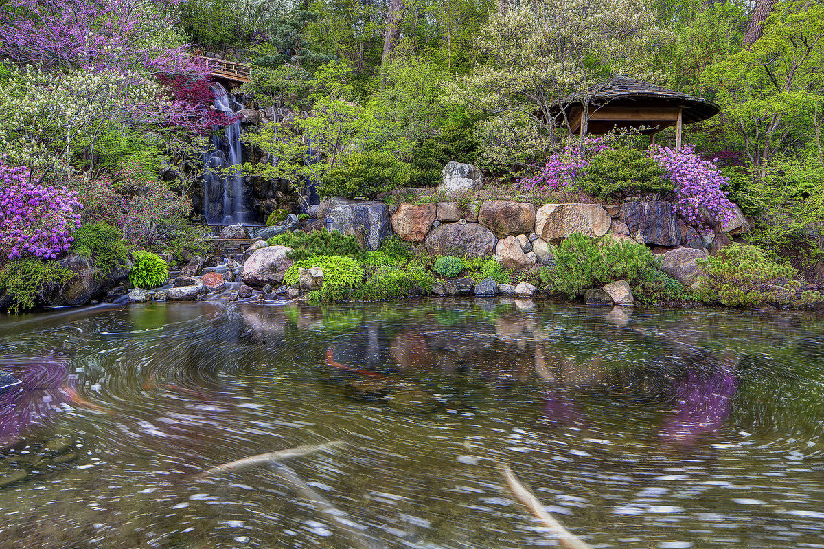 Japanese anderson gardens in rockford illinois waterfall with koi pond