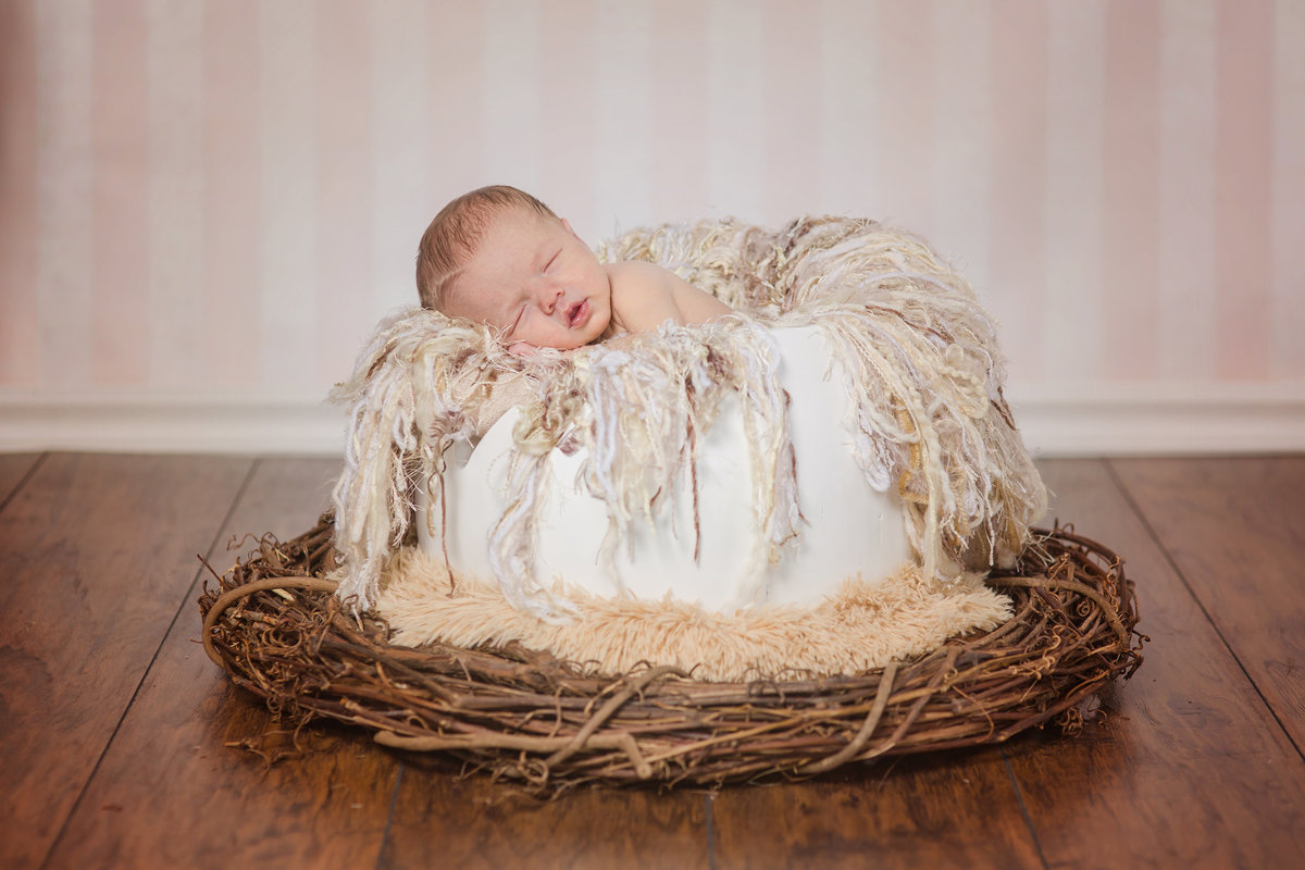 baby in a nest newborn photos