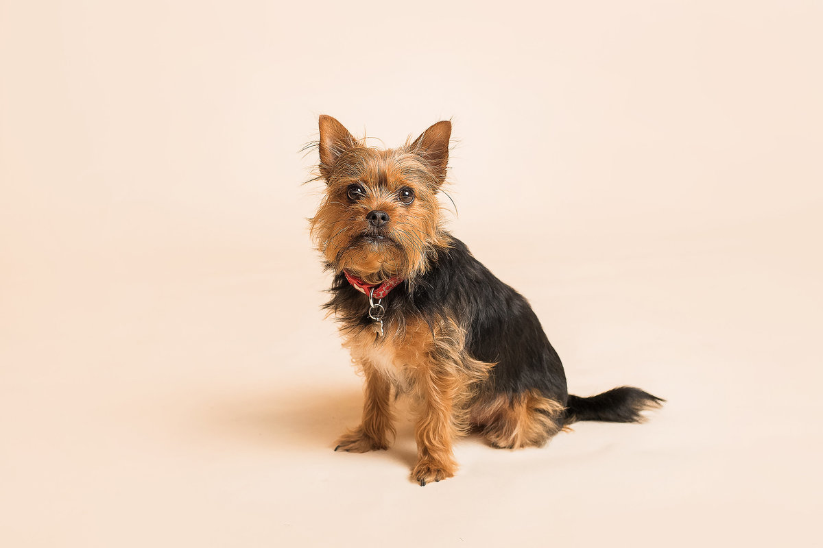 FERNDOWN BOURNEMOUTH PET PHOTOGRAPHY STUDIO 00048 (2)