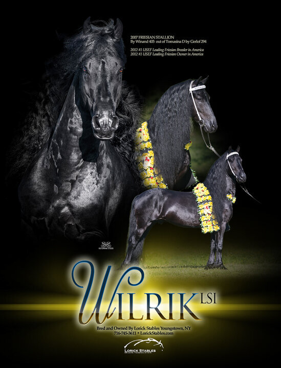 friesian stallion ad design promo