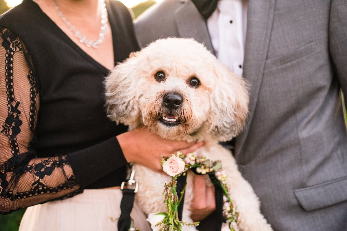cute-dog-engagement-photos