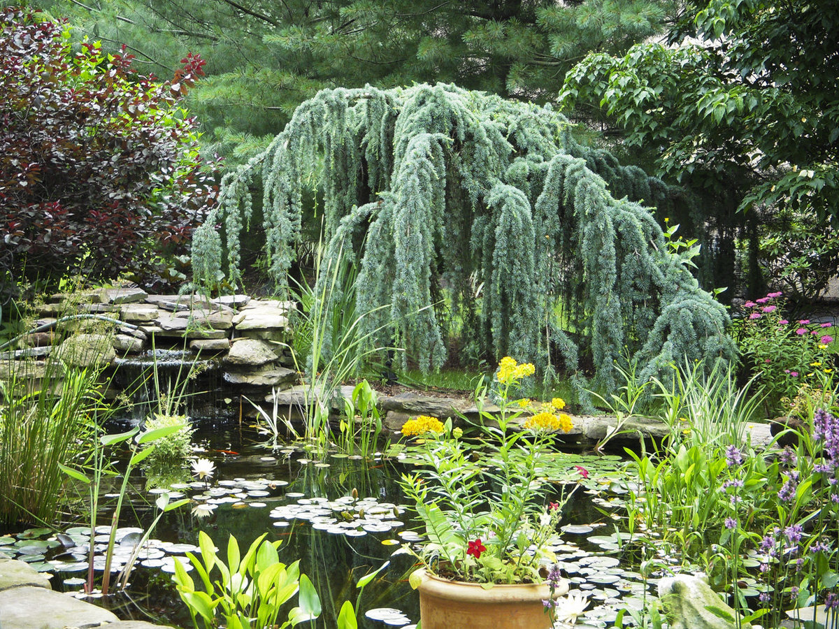 philadelphia-eco-garden-design-046w