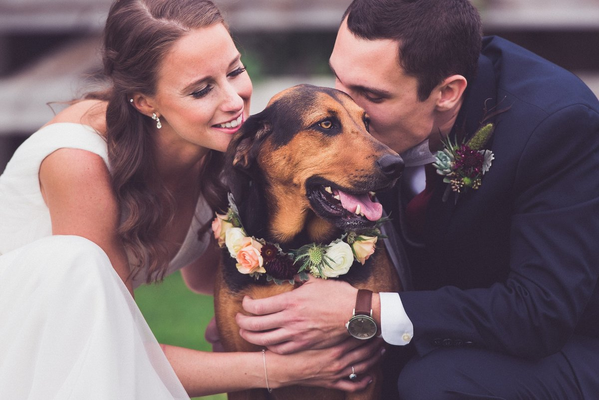 gibbet-hill-wedding-dog