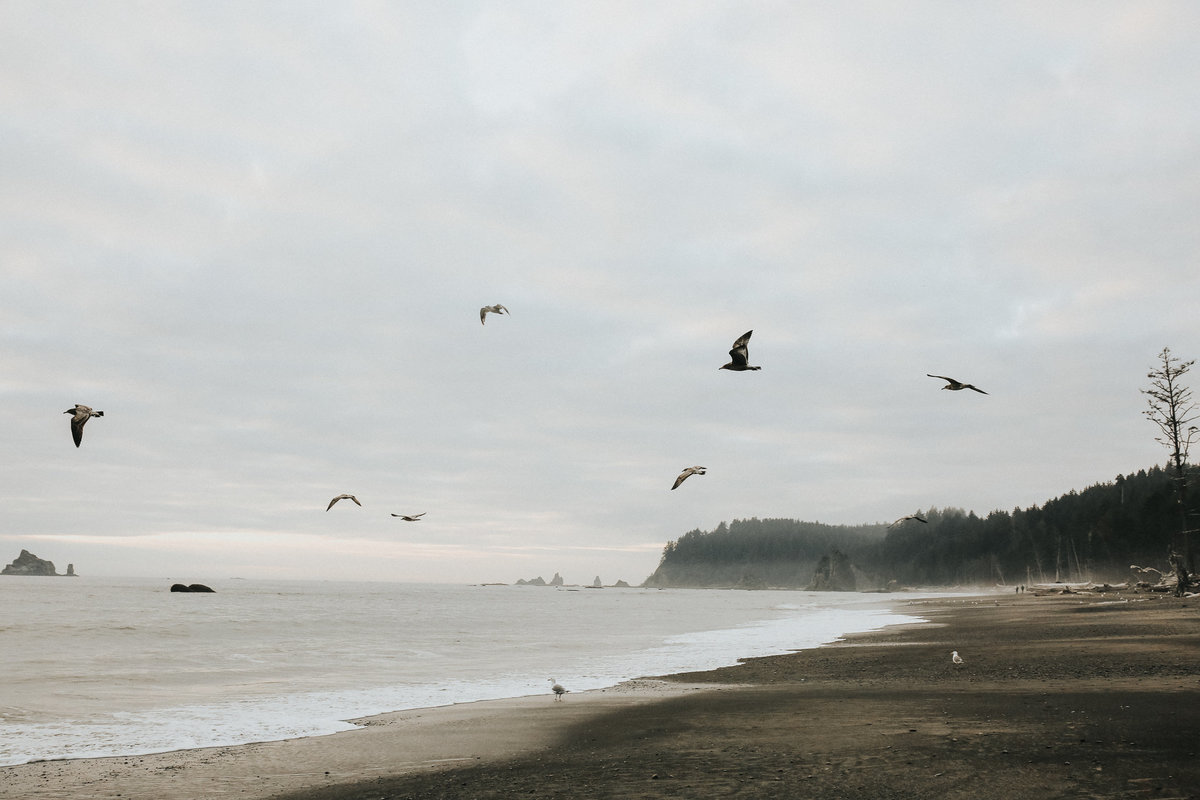 Birds fly by on the coast of Washington state