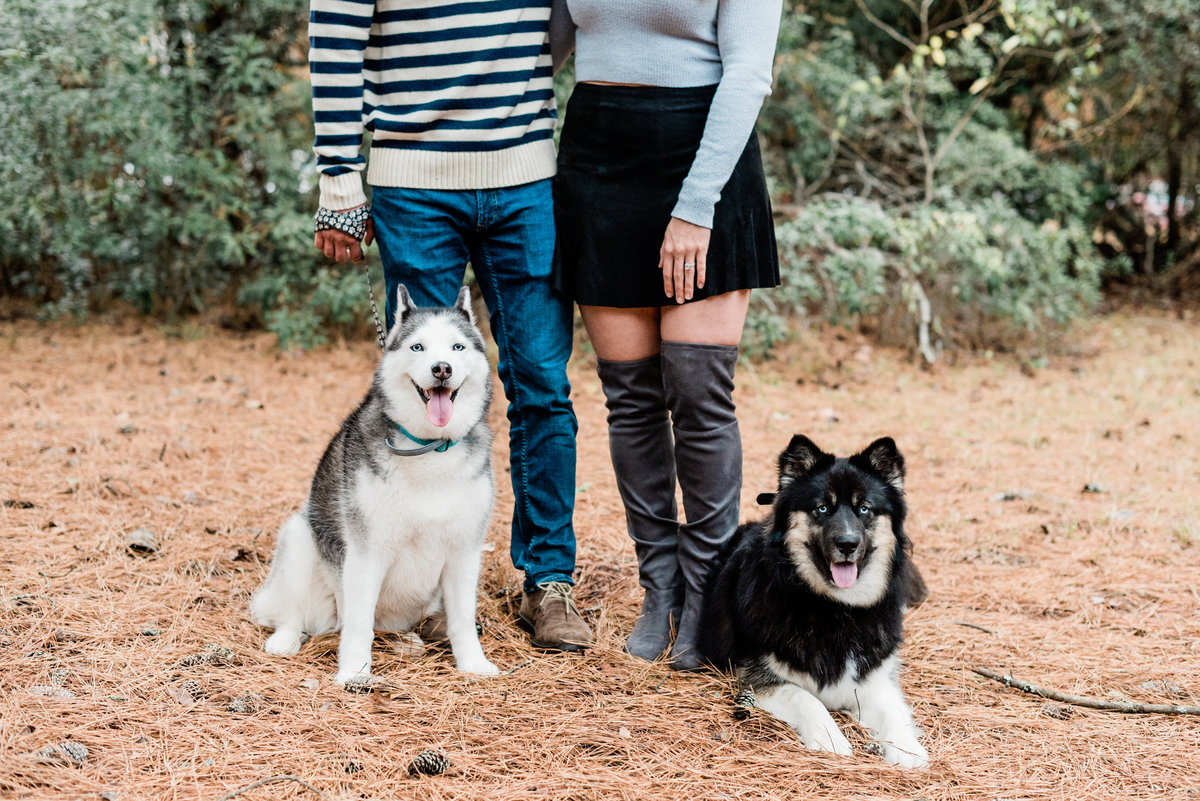 engagement pictures with dogs photo