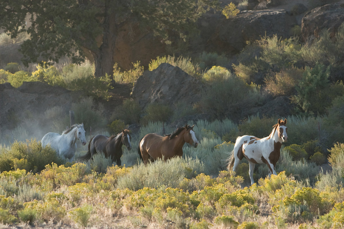 wenatchee horse photographer wild horses  Lynette Smith Photography