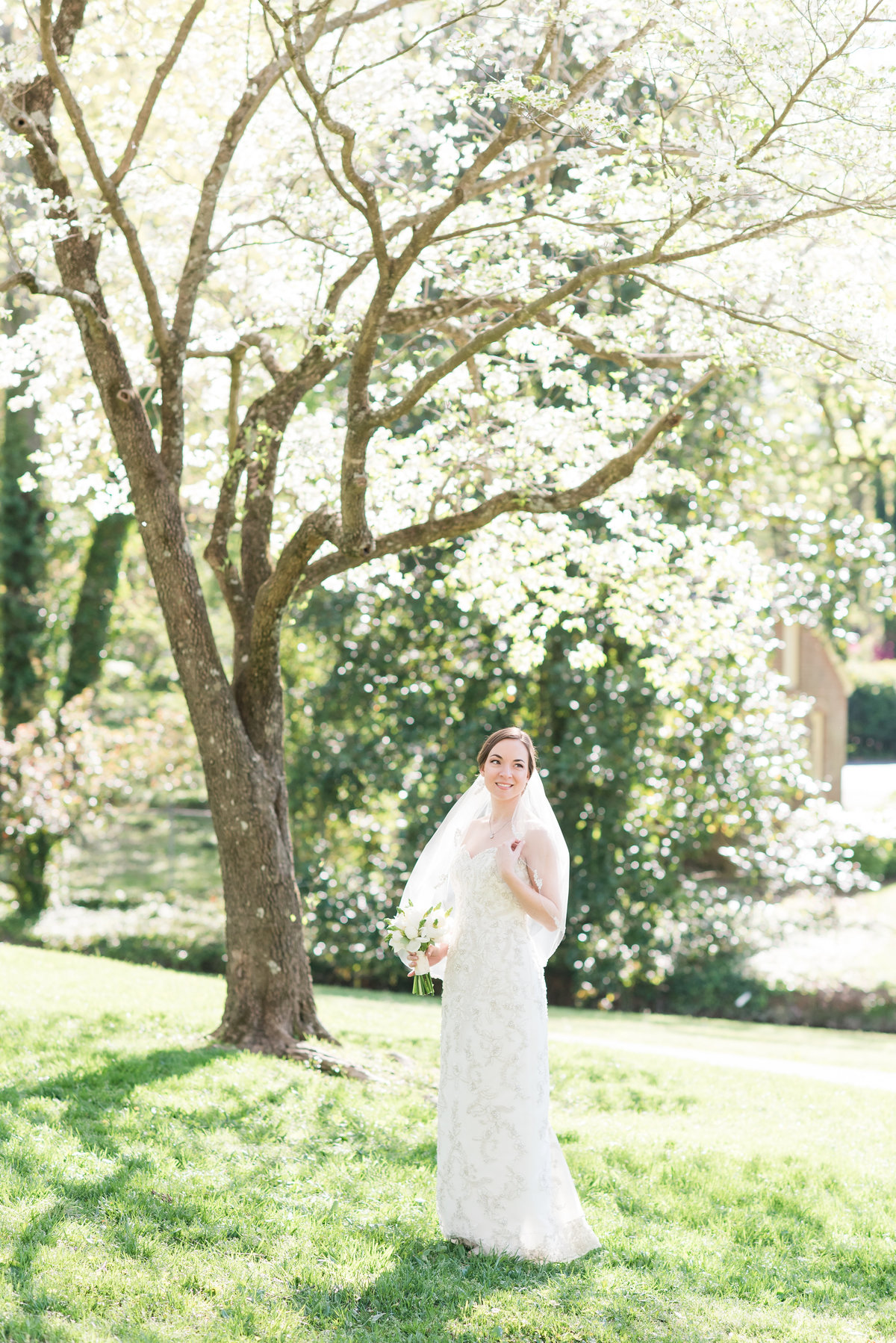 a bride wearing a laced strapless dress with no train with a mid-length veil standing underneath a cherry tree in early spring in Burlington
