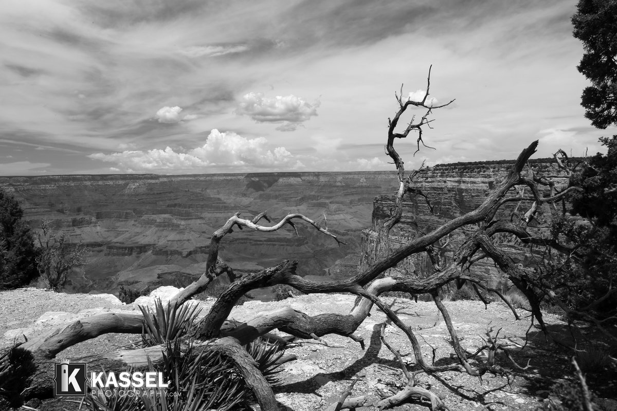 Grand Canyon. Black n white photography by Kassel Photography