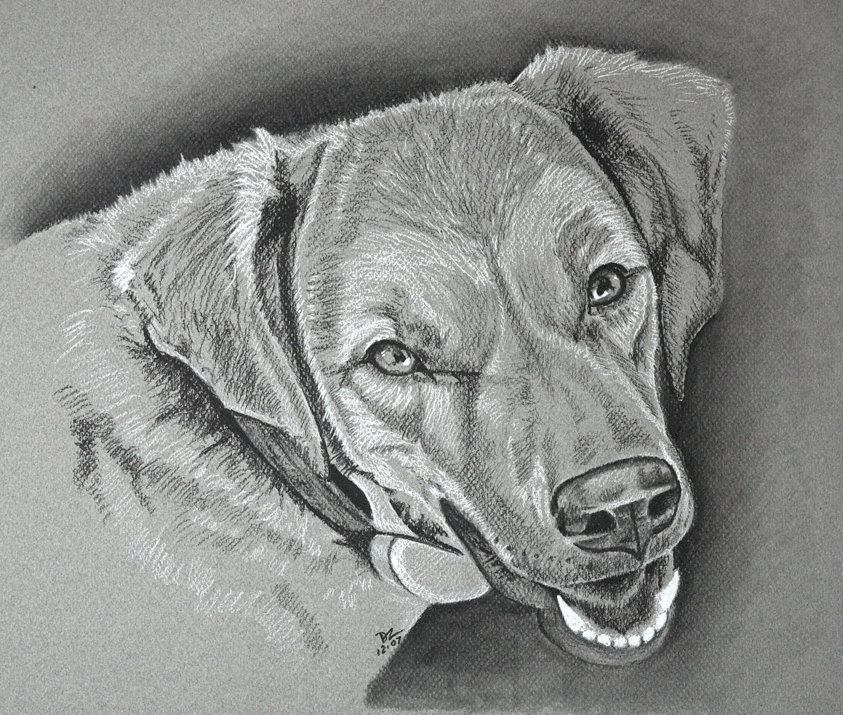 2007-12 Kimba - charcoal on grey paper-01-2