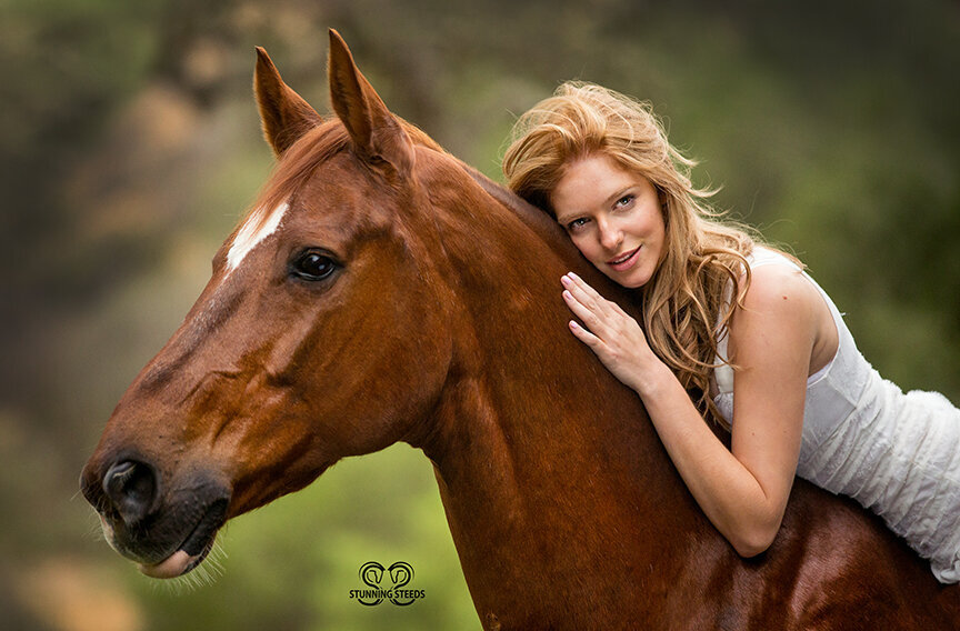warmblood horse beautiful girl