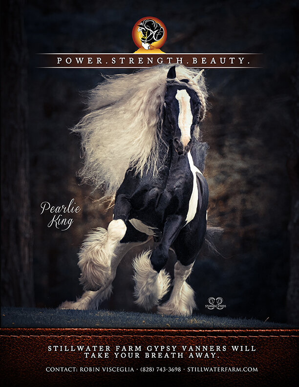 stallion marketing ad promotion
