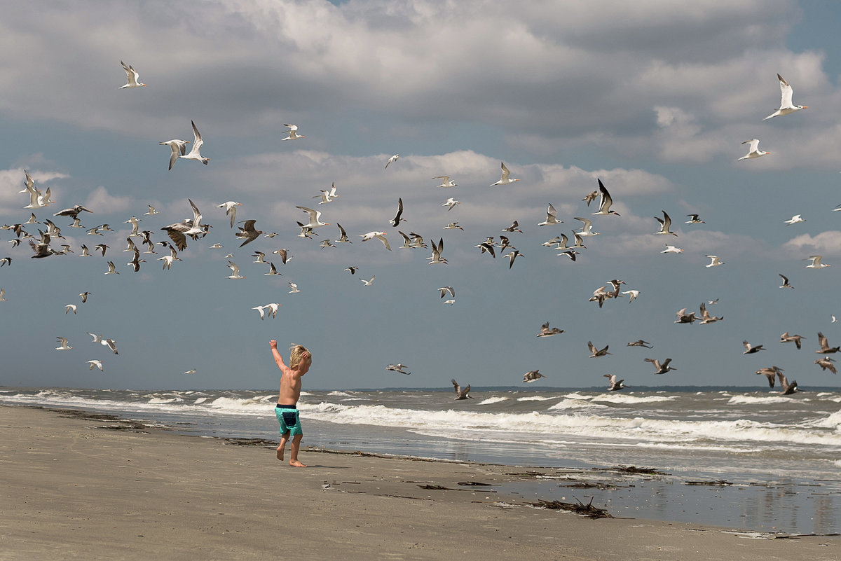 a boy chases the birds