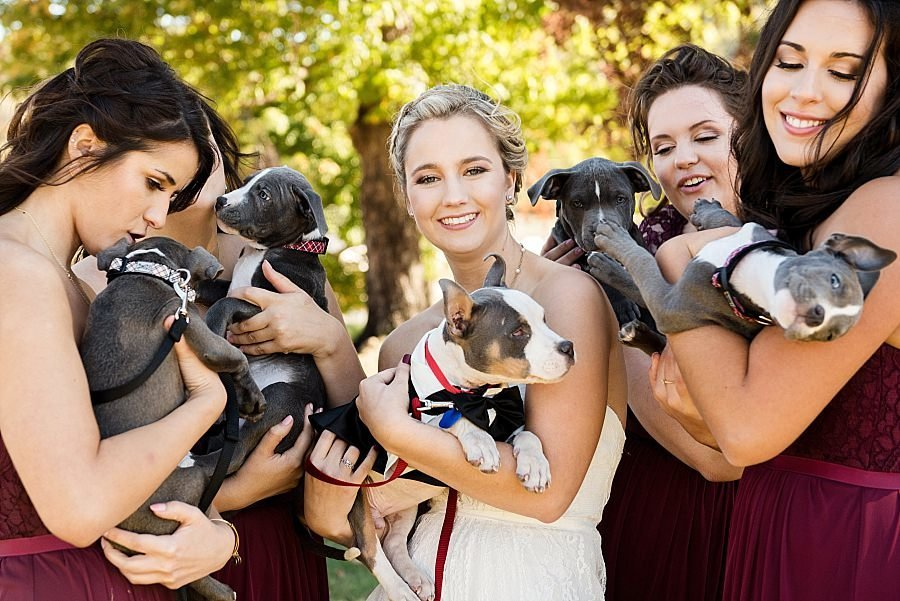 Cheerful Canadian bride and bridesmaids with adorable puppy dogs