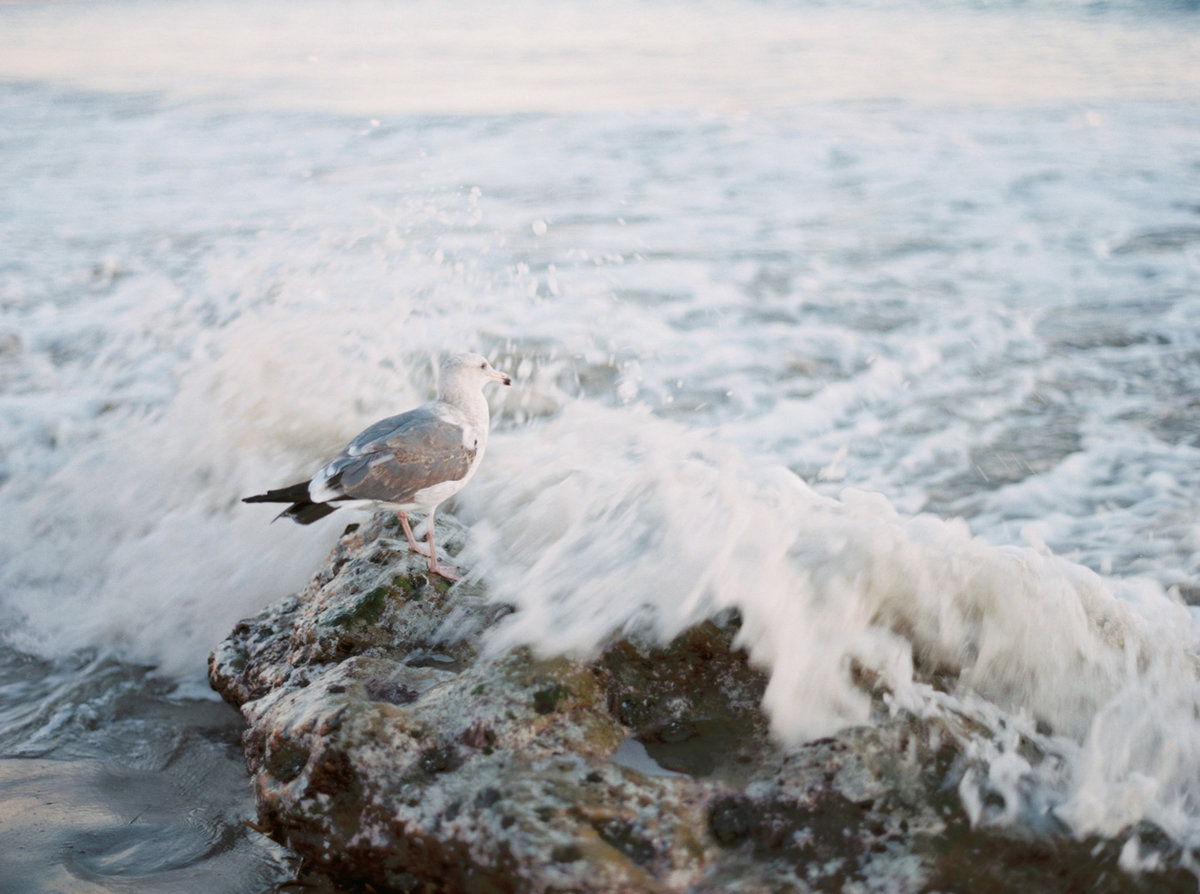 oceanside-elopement-destination-california-style-me-pretty-melanie-gabrielle-photography-52