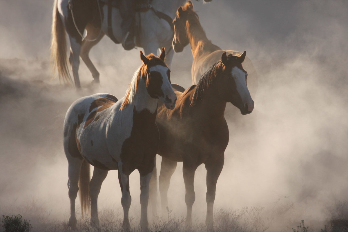 horses in dust photographer  Lynette Smith Photography