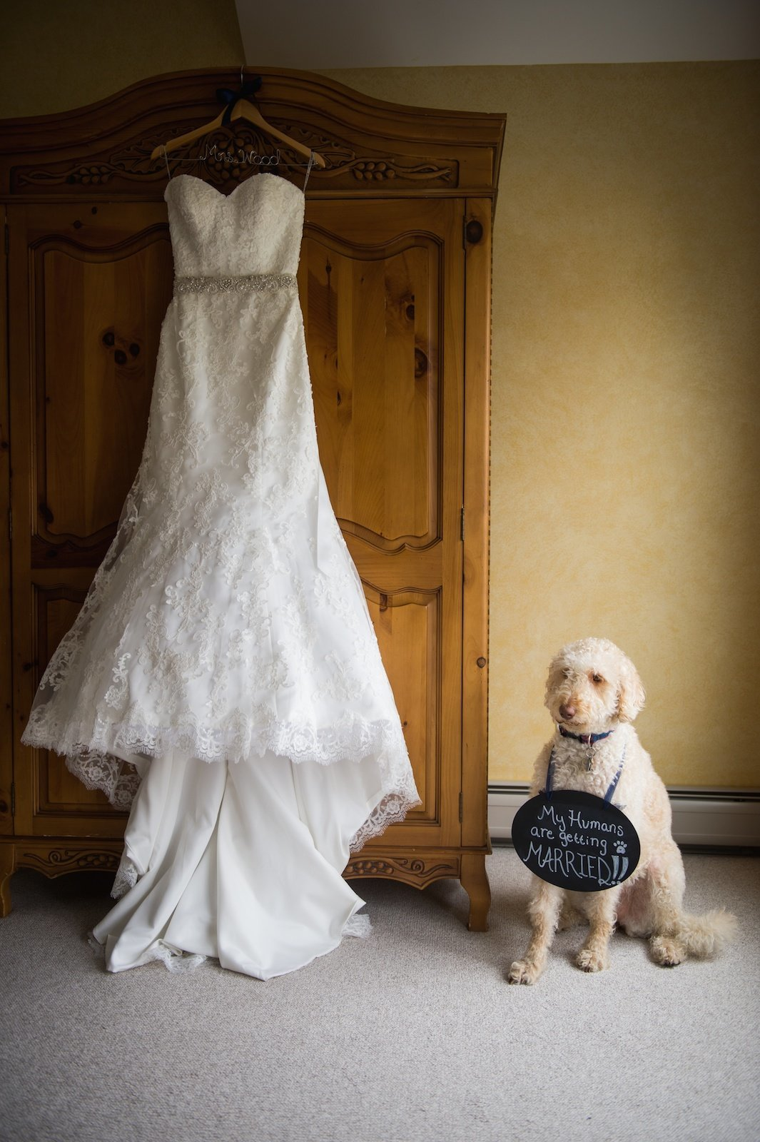 fine art wedding photo of the bride's dog sitting next to the wedding dress  at the Red Clover Inn