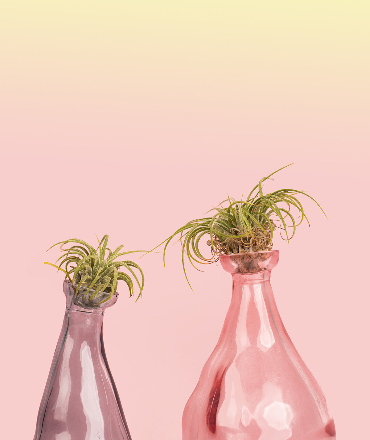 los angeles product photographer house plant project air plants