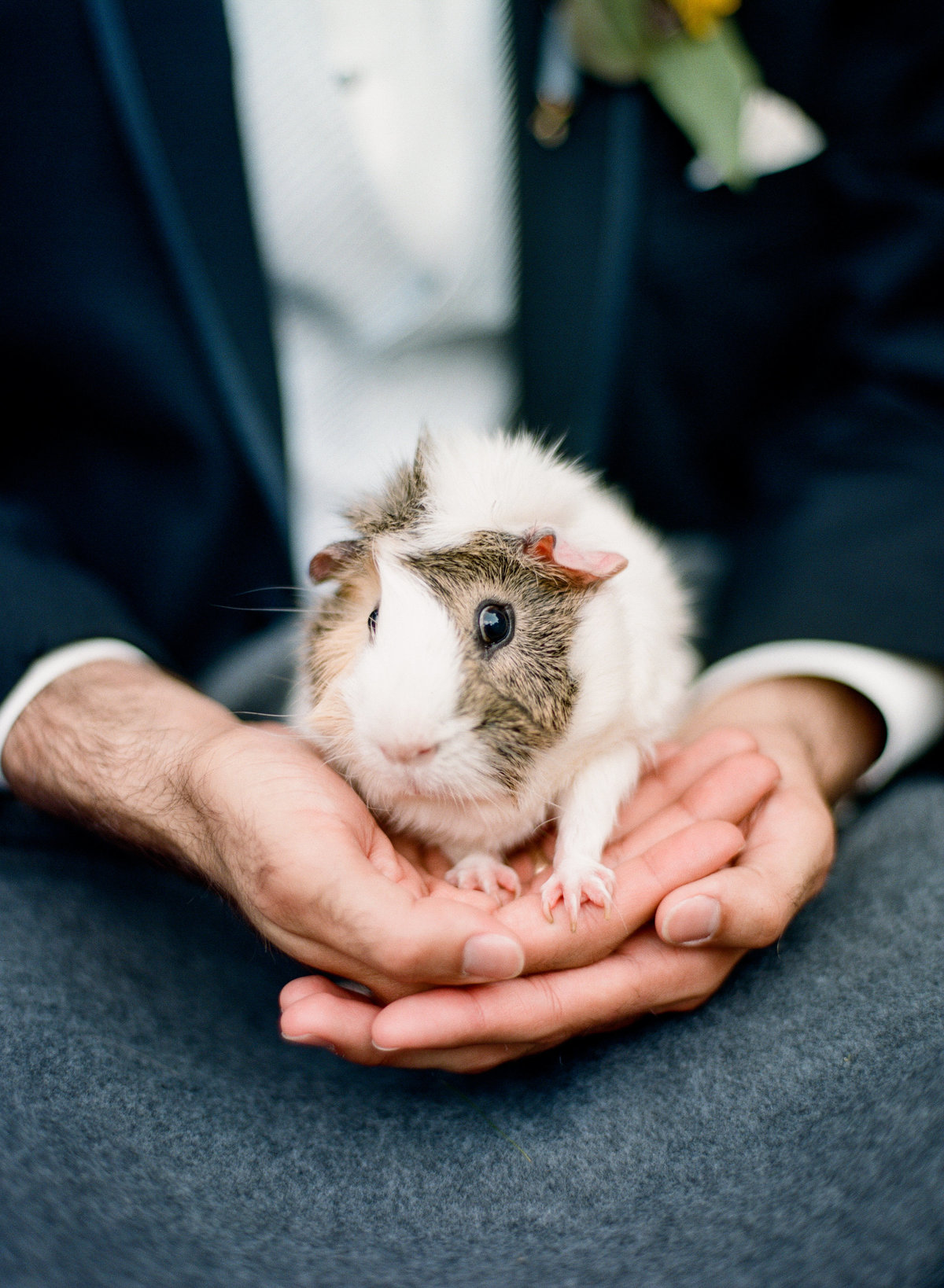 new york camp wedding guinea pig ring bearer