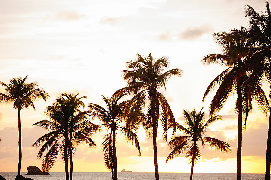 palm trees at sunset st lucian wedding