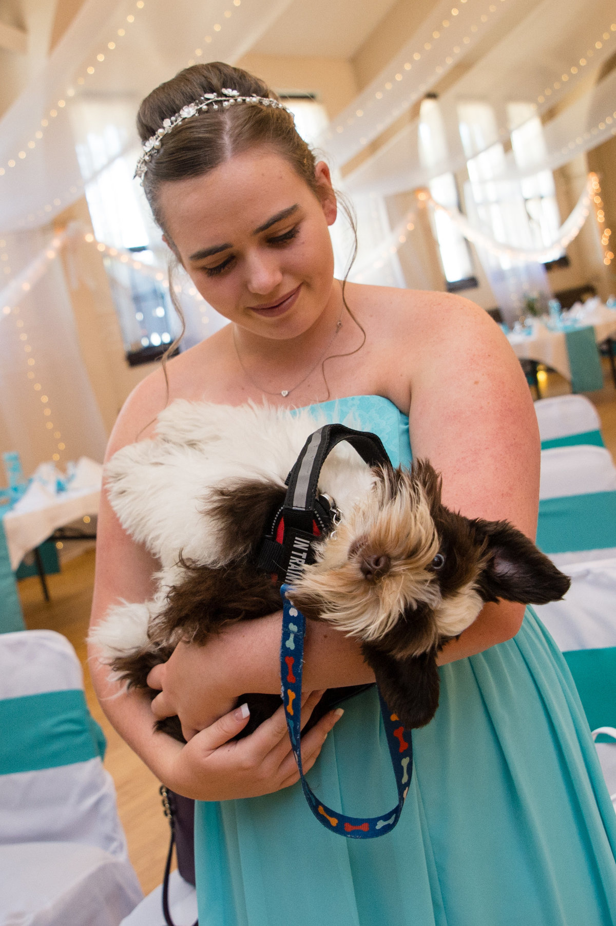 wedding service dog upside down adorable face