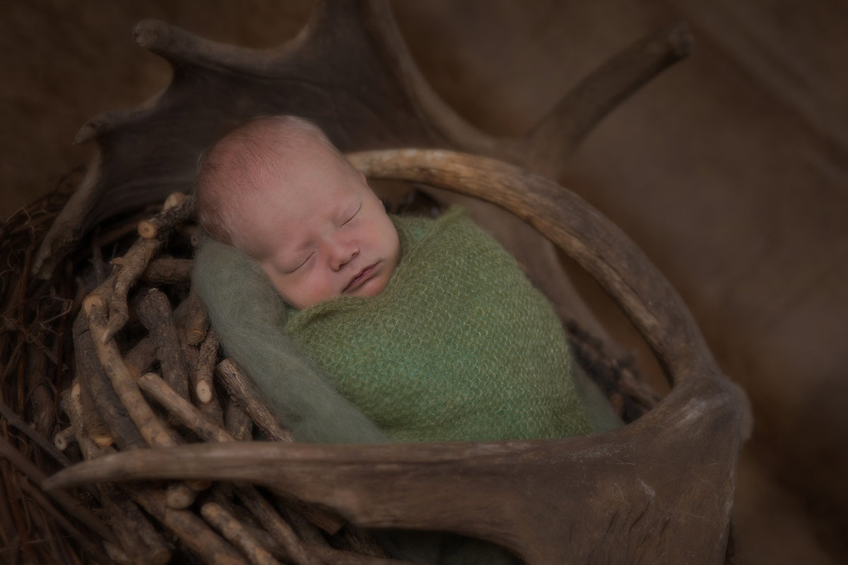 Newborn boy in moose horns