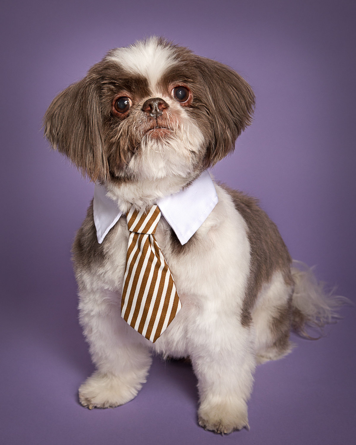 Dog with Tie Collar Picture