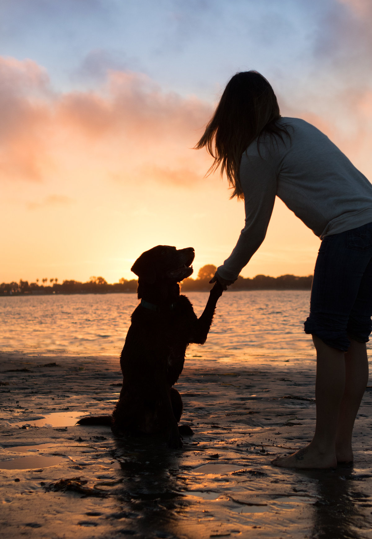 san_diego_dog_photographer_11