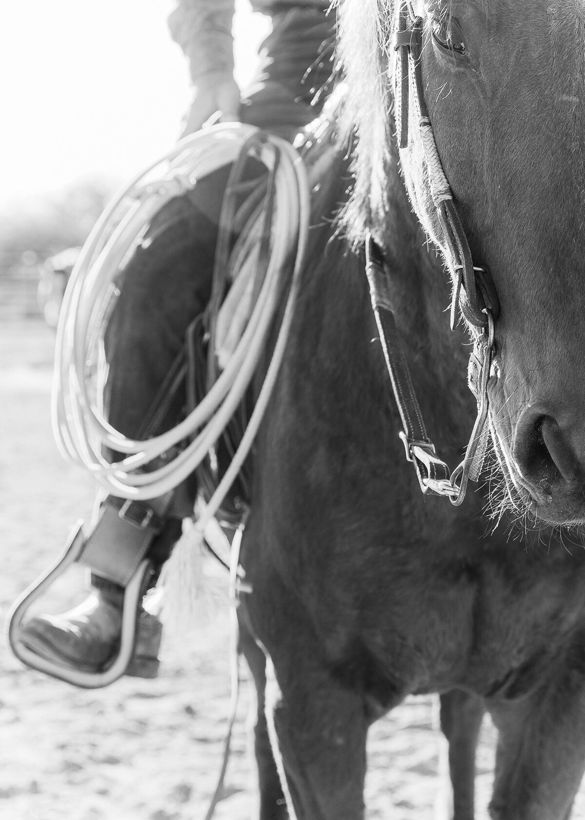 close up of a horse's nose with a cowboy sitting on his back