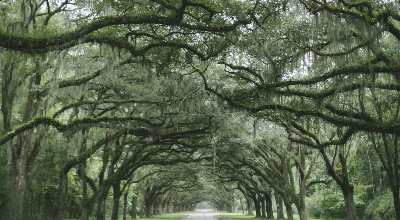 Savannah Georgia - DiBlasio Photo-0100