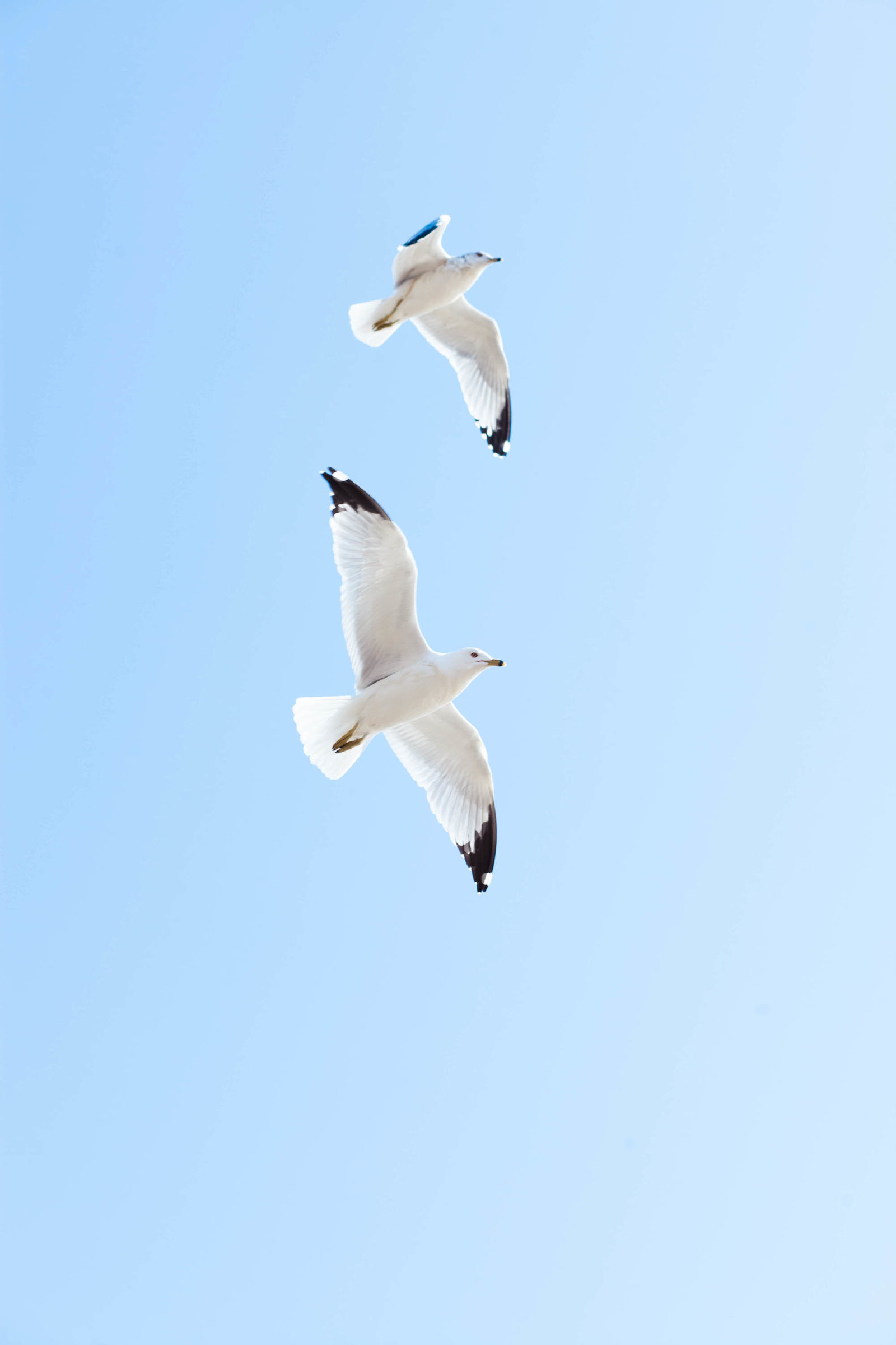 seagulls-flying-georgetown-washington-dc-kate-timbers-photography-1247